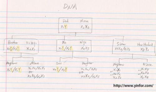 DNA-xy